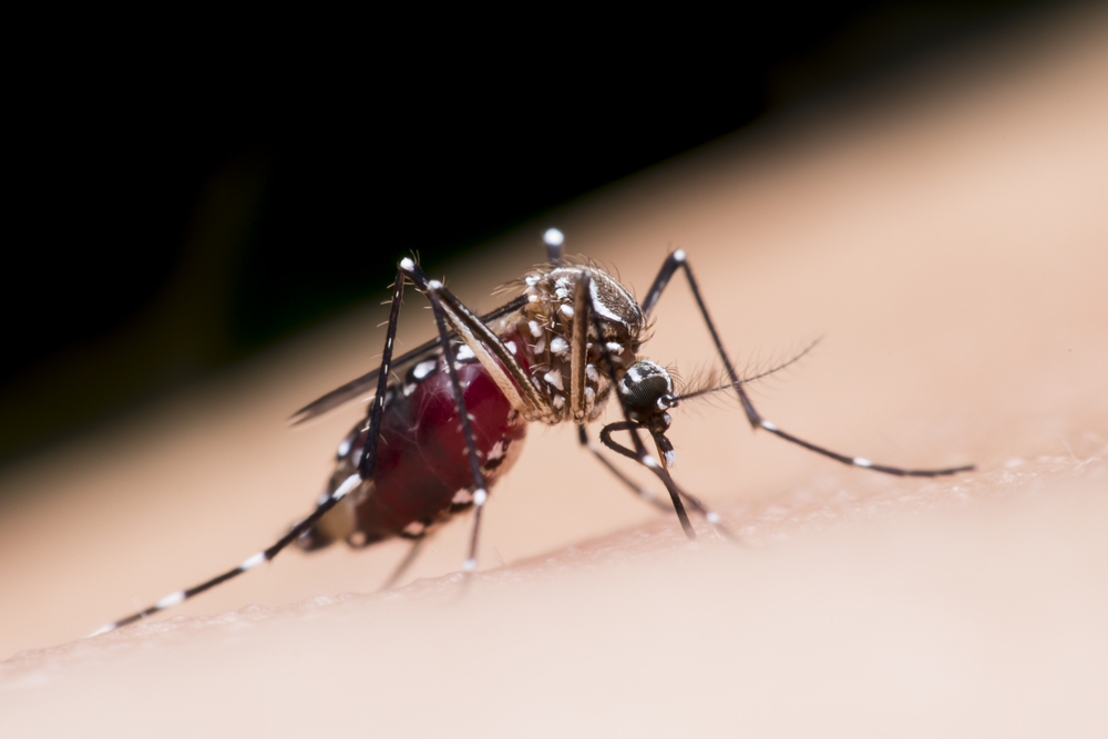 how to prevent mosquito bites